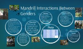 Mandrill Interactions Between Genders