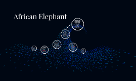 Copy of African Elephant