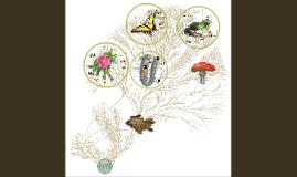 Diversidad biológica 2017-2
