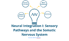 Neural Integration I: Sensory Pathways and the Somatic Nervous System