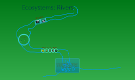River Ecosystem
