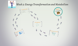 Week 3: Energy Transformation and Metabolism