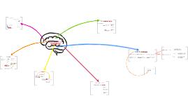 Modelos Neurocognitivos