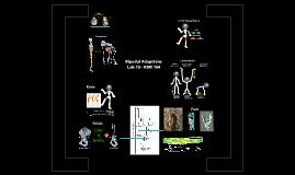 Lab 7: Bipedal Adaptations