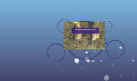 Ökosystem Wattenmeer