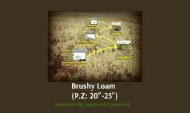Brusy Loam - Mtn Big Sagebrush