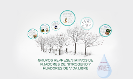 Copy of Copy of Bacterias Fijadoras De Nitrogeno