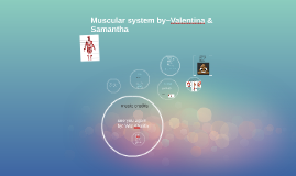 Muscular system by~Valentina & Samantha