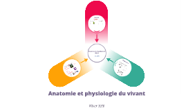 Anatomie et physiologie - GCB - introduction