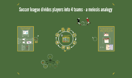 Soccer league divides players into 4 teams - a meiosis analogy