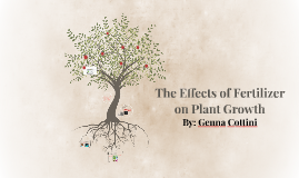 The Effects of Fertilizer on Plant Growth