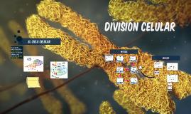 Division celular