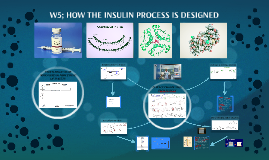 W5; HOW THE INSULIN PROCESS IS DESIGNED