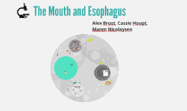 The Mouth and Esophagus