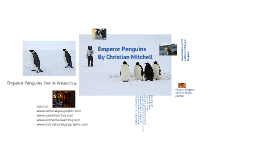 Copy of Emperor Penguins
