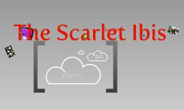 Scarlette Ibis