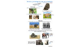 Historia de vida elefantes