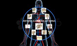 ARTERIA CAROTIDA EXTERNA