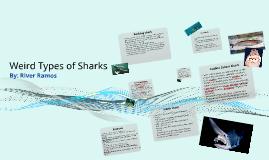 Weird Types of Sharks