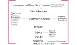 Copy of Cuerpo Humano