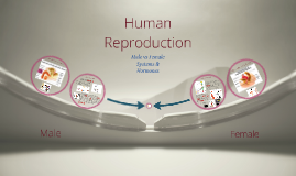 Human Reproductive Systems & Hormones