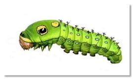 caterpillars body