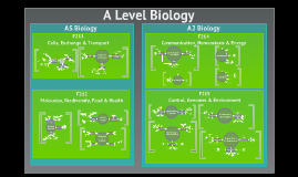 A Level Biology (OCR)