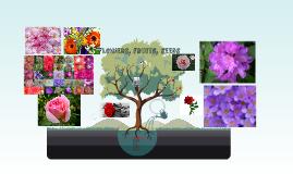 flowers, fruits, seeds