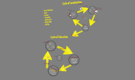 the cycles of socialization and liberation according to bobbie harro In some of my posts, i might refer to the cycle of socialization some people might wonder, what is the cycle of socialization it is the cycle we are born.