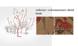 Copy of asforeye : a documentary about birds