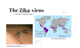 The Zika-virus