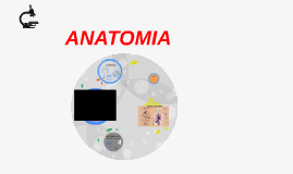 Copy of ANATOMIA