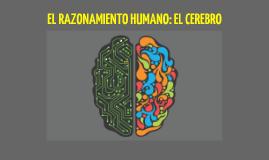 Razonamiento Humano: El cerebro