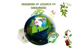 PRODUCCION DE JITOMATE EN INVERNADERO