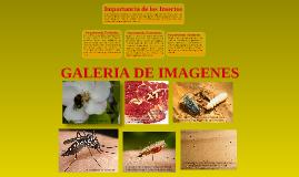 Importancia Económica, ecológica y sanitaria de los insectos.
