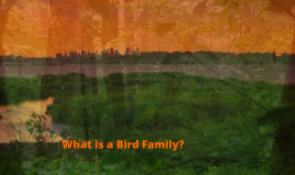 Bird Families - Part I - The Children's Book of Birds by: Olive Thorne Miller