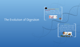 The evolution of Digestion