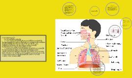 Copy of ระบบหายใจ