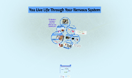 You Live Life Through Your Nervous System