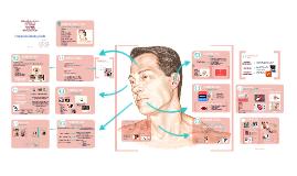 Copy of Examen de cabeza y cuello