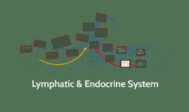 Lymphatic & Endocrine System