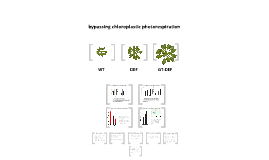 Amplified biomass production in Arabidopsis thaliana