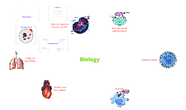 A-level biology 1