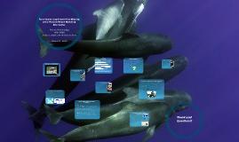 Copy of Marine Mammals - Faroe Island Whaling Prezi