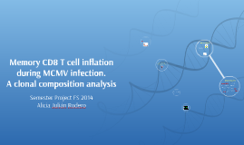 Memory CD8 T cell inflation during MCMV infection.