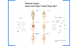 Human Body: were are they? what they do?