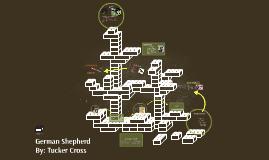 Copy of German Shepherds