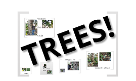 Copy of Tree Project