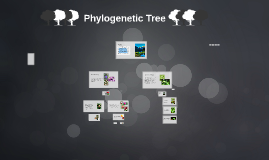 Copy of Phylogenetic Tree