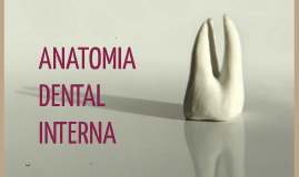Copy of ANATOMIA INTERNA